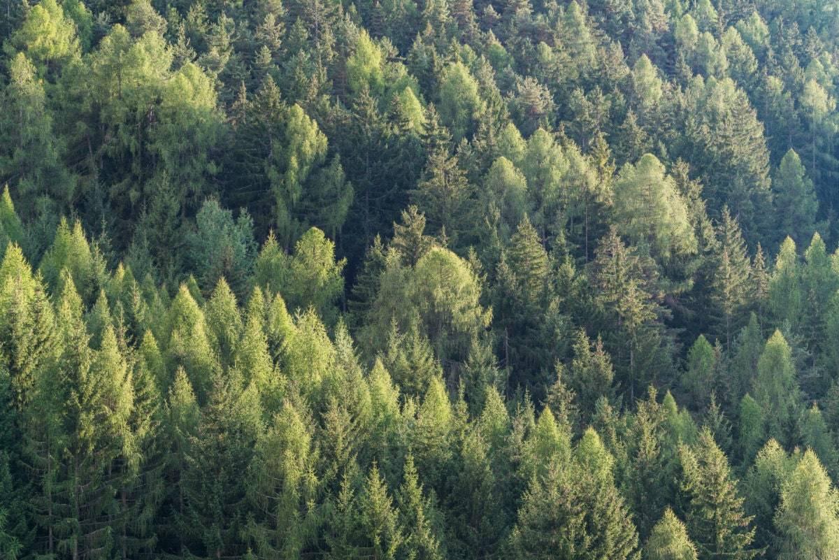 Forstwirtschaft Profesionelle Übersetzung Übersetzungsbüro Wien Nativy